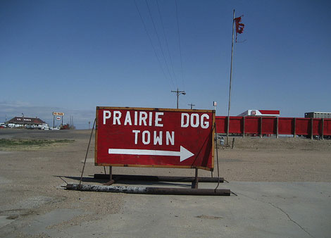 Prairie Dog Town in Kansas